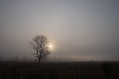Standing alone tree. In the mist, standing alone tree Royalty Free Stock Image