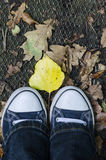 Standing in autumn Stock Photography