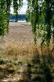 standing behind birch branches overlooking agriculture fields