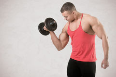 Standing Bicep Dumbbell Curl. Fit athlete doing standing dumbbell curls for training his biceps, isolated in grey Royalty Free Stock Image