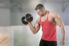 Standing Bicep Dumbbell Curl. Fit athlete doing standing dumbbell curls for training his biceps,  in white Royalty Free Stock Photos