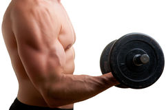 Standing Bicep Dumbbell Curl. Personal Trainer doing standing dumbbell curls for training his biceps Stock Photo