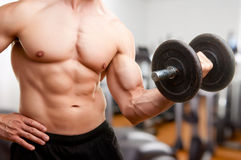 Standing Bicep Dumbbell Curl. Personal Trainer doing standing dumbbell curls for training his biceps, in a gym Stock Photography
