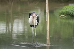 Standing bird Royalty Free Stock Images
