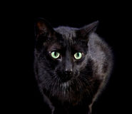 Standing Black Cat Royalty Free Stock Photos