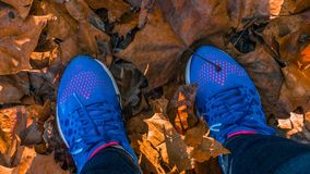 Standing with blue sneakers on falls leaves. Standing with blue sneakers on colorfull fall leaves on the ground royalty free stock images