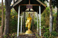 Standing Buddha in forest Stock Images