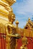 Standing Buddha golden statue in wat yard stock images