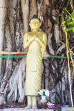 Standing buddha statue. Standing gold buddha statue in front of the tree Royalty Free Stock Image