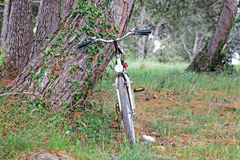 Standing bycicle. Wooden landscape and standing bycicle next to tree Stock Image