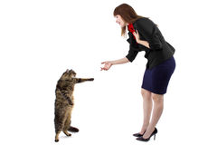Standing Cat Stock Photography