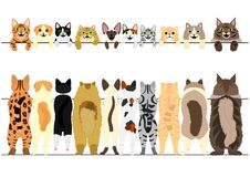 Free Standing Cats Front And Back Border Set Royalty Free Stock Photos - 107208538