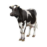 Standing cow isolated on white background Royalty Free Stock Images
