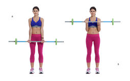 Standing curl with a barbell. Step by step instructions: Stand straight holding a barbell with an underhand grip, your hands shoulder width apart and your arms royalty free stock photography