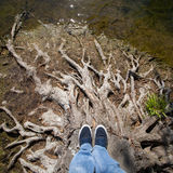 Standing on dead tree roots Royalty Free Stock Photos
