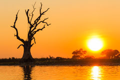 Standing dead tree and Sunset ,  Amarapura in Myanmar (Burmar) Stock Image