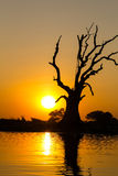 Standing dead tree and Sunset ,  Amarapura in Myanmar (Burmar) Stock Photos