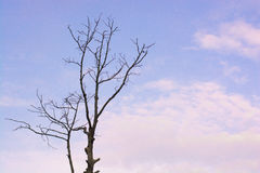 Standing dead twigs, blue sky, white clouds float beautiful. Royalty Free Stock Photos