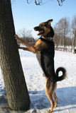 Standing dog. Dog standing near the tree Royalty Free Stock Photos