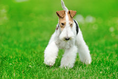 Standing dog Royalty Free Stock Image