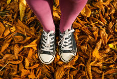 Standing on dry autumn leaves Stock Images