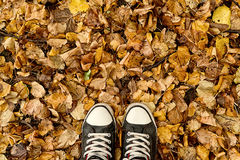 Standing in dry autumn leaves Royalty Free Stock Images