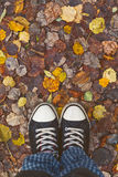 Standing in dry autumn leaves Stock Image