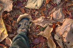 Top view foot in sport shoe stands on dry foliage royalty free stock photo