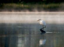 standing för heronjournalflod Arkivbilder