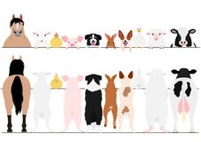 Standing farm animals front and back border set. Standing farm animals in a row front and back border set stock illustration