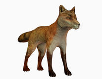 Standing fox Stock Photography