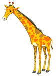 Standing giraffe Stock Photos