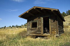 Standing Guard. A pit bull terrier guards the entrance to an abandoned old cabin in Montana Royalty Free Stock Images