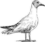 Standing gull Stock Photography