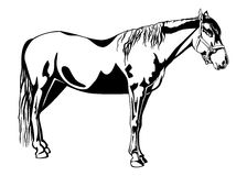 Standing horse Royalty Free Stock Photos