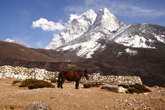 Standing horse with Mount Ama Dablam in the background. Stock Images