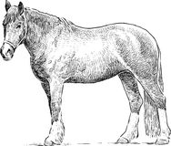 Standing horse Stock Photography
