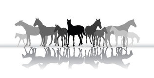 Standing horses silhouette with reflection Stock Photos
