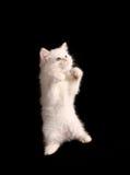 Standing kitten Stock Photos