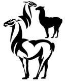 Standing llama design Stock Photos