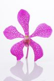 Standing Orchid Head Stock Photography
