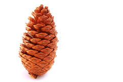 Standing - Pine Cone Stock Photos
