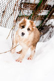 Standing puppy Stock Photos