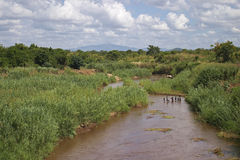 Standing in the river, Malawi Stock Images
