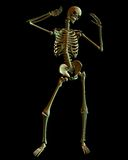 Standing Skeleton with Spooky Green lighting Stock Photos