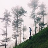 Standing solo. Look deep into nature, and then you will understands Stock Images