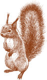 Standing squirrel. Vector image of the standing cute squirrel Royalty Free Stock Photos