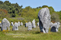 Standing stones at Carnac in France Stock Image