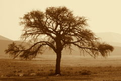 Standing tall. A tree standing tall amidst it all royalty free stock photography