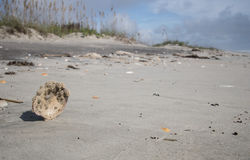 Standing watch. A shell washed up  on the shore stands precariously and in defiance of gravity Royalty Free Stock Images